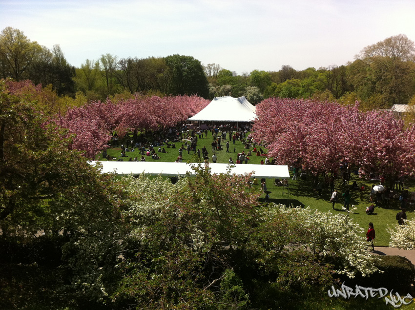 Brooklyn's Cherry Blossom Festival Turns 30!